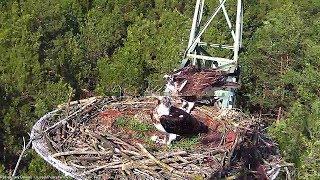 RybołowyOnline   OspreysOnline - Na żywo