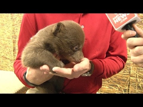 Yellowstone Bear World welcomes 11 baby bear cubs