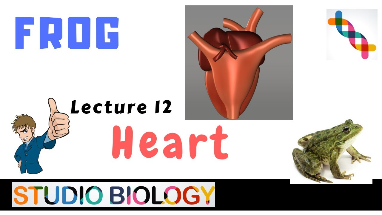 Class 11-Zoology Lectures-Discuss the structure of the ...