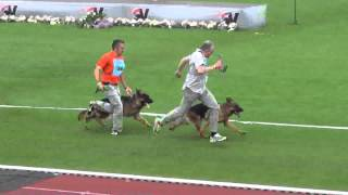 Repeat youtube video 2013 SV BSZS Kassel GHKR Males First Ring part 1