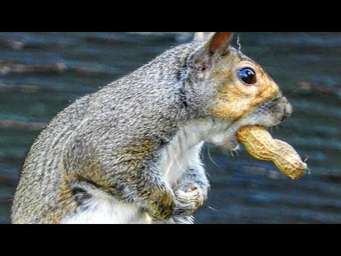 Ultimate 8 Hour Video Of Squirrels Fun For Your Dogs and Cats