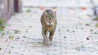 Мужчина случайно столкнулся со своей потерянной кошкой, реакция питомца стала Интернет-сенсацией