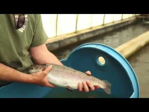 Ontario Aquaculture - Spawning And Broodstock Practices