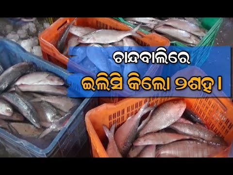 Price of Ilish Fish Drops To Rs.200 Per Kg In Dhamra