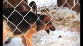 "ПРИЮТ ДЛЯ СОБАК ""ГАВ!"" / DOGS RESCUE IN RUSSIA"