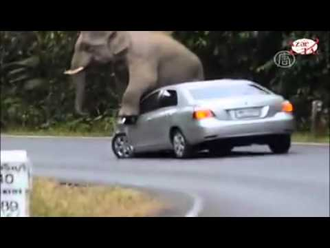 Thumbnail: Elephant destroys cars on safari. Bye Bye car