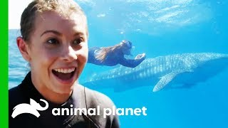 Gambar cover Bindi Swims With A Whale Shark And Names Him After Her Dad! | Crikey! It's The Irwins