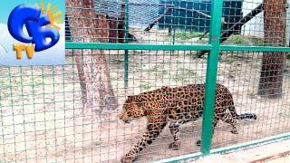 Едем в зоопарк Экопарк. Лев медведь пума ягуар гепард и другие Lion leopard bear puma jaguar(Старший брат Даня и Миланка едем в зоопарк Экопарк смотреть как живут дикие животные: лев, леопард, гепард,..., 2016-05-02T19:35:45.000Z)