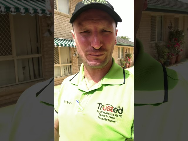 Have you breached your termite barrier ?
