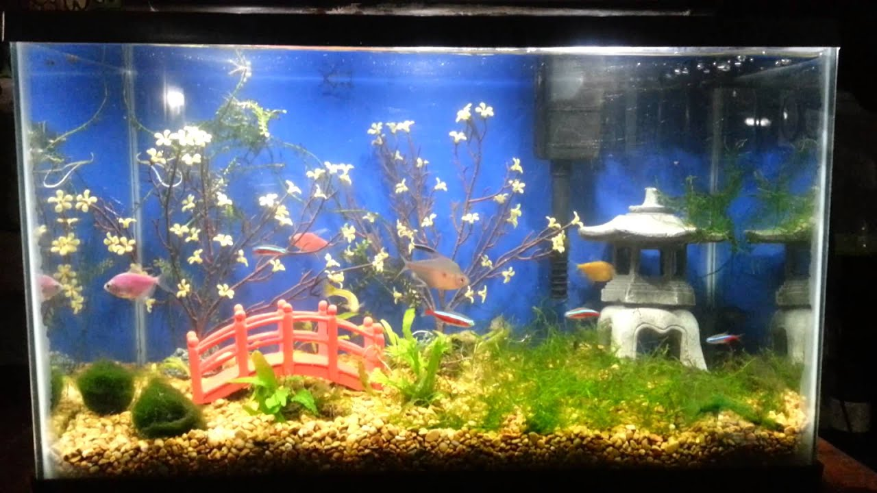 Asian theme aquarium. - YouTube