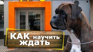 Как научить собаку ЖДАТЬ вас [около магазина]