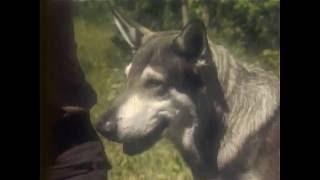 Маленький Бродяга S01E02 (The Littlest Hobo RUS)