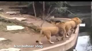 Phim lông tiếng bahnar [] phim hài  động vật sém ma cười rớt răng -kon bahnar vlog