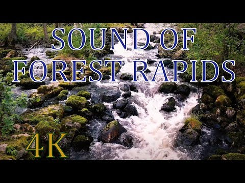 4K Forest falls  with birds singing 2 HOURS - sound of river stream