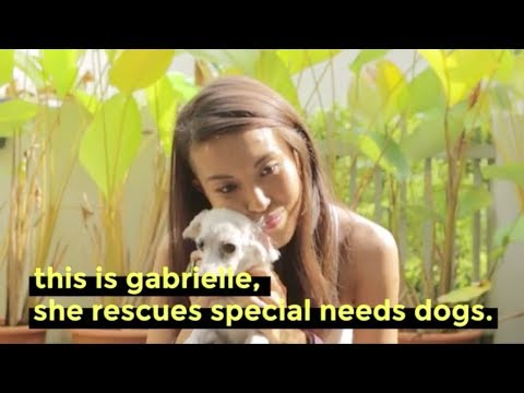 A Foster Mum To Special Needs Dogs