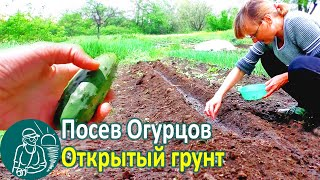 видео Семена огурцов