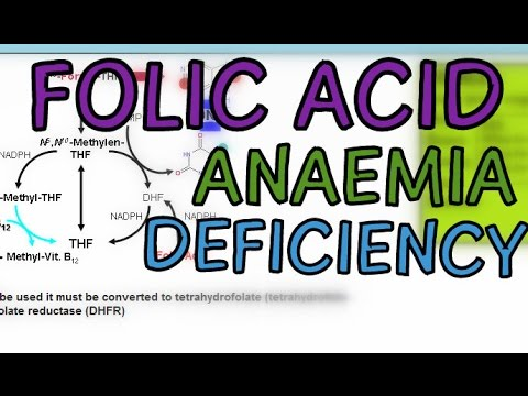 Folic Acid Functions, Tetrahydrofolate, Megaloblastic Anaemia and Folic Acid Deficiency