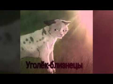 Картинки коты воители знаки зодиака