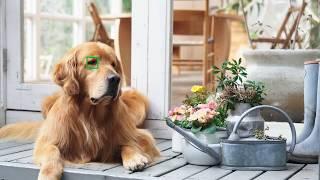 Sony α7RIII u0026 α7III │ 動物即時眼部偵測自動對焦│Real-time Eye AF for Animals