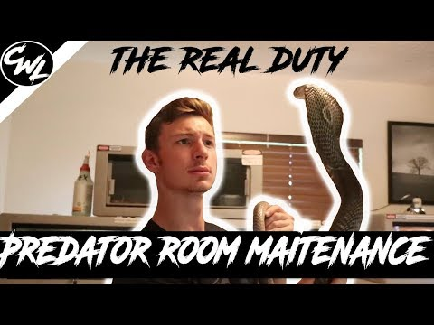 VENOMOUS SNAKE ROOM CLEANING!