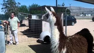 Zoo Animals at the Hesperia California Zoo [HD]