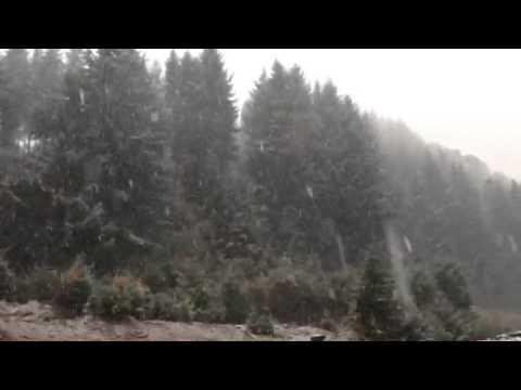 Puerto Fuy Nevado #Panguipulli #Neltume