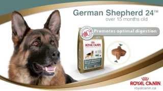 Royal Canin - German Shepherd - Guelph - 1-0849
