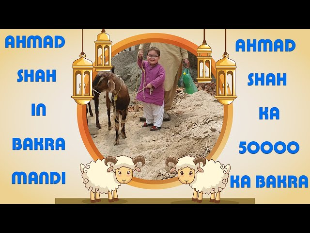 Ahmad Shah In Bakra Mandi | 50000 Ka Bakra | Bakra Mandi D.I.Khan