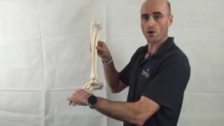 FSM Video Series - Ankle Mobility by Ross Kinsella, Sports Physiotherapist
