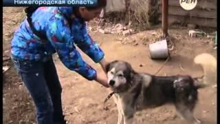 Собаку спасают из настоящего концлагеря