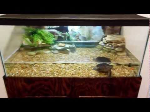set up my box turtle setup with me Doovi