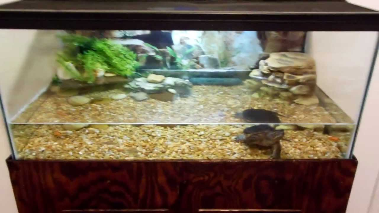 Turtle Tank Decor Snapping Turtle Tank Setup Youtube