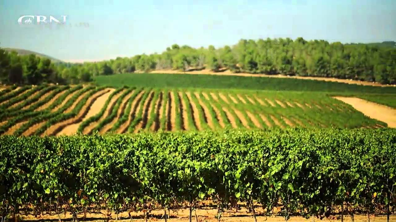 Made In Israel Agriculture Youtube