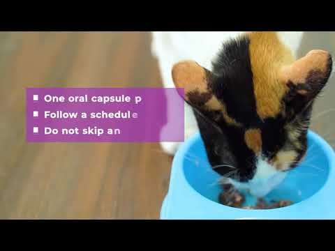Basmi FIP Oral Capsules: An Easy and Effective FIP Treatment Option