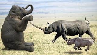 Elephant vs Rhino Real Fight - Ephant Shows Who