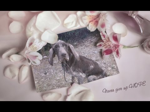 An Appeal for HOPE - Bracco Italiano Rescue Organisation ( BIRO )