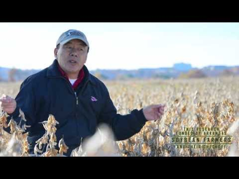 Field to Film: Featured Research | Dr. Chen Talks Soybean Breeding in Arkansas