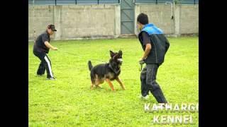 Kathargo Kennel - Ipo Schutzhund Training 3, Malaysia