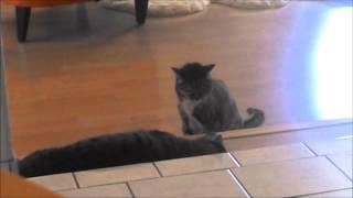 Как коты поразили Прораба, ничего такого не ожидавшего - уведите детей в другую комнату.