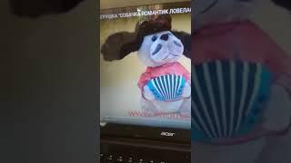 Обзор собачка ловелас 2