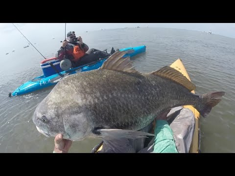 Kayak Fishing Dreams: Big Striper And Black Drum!