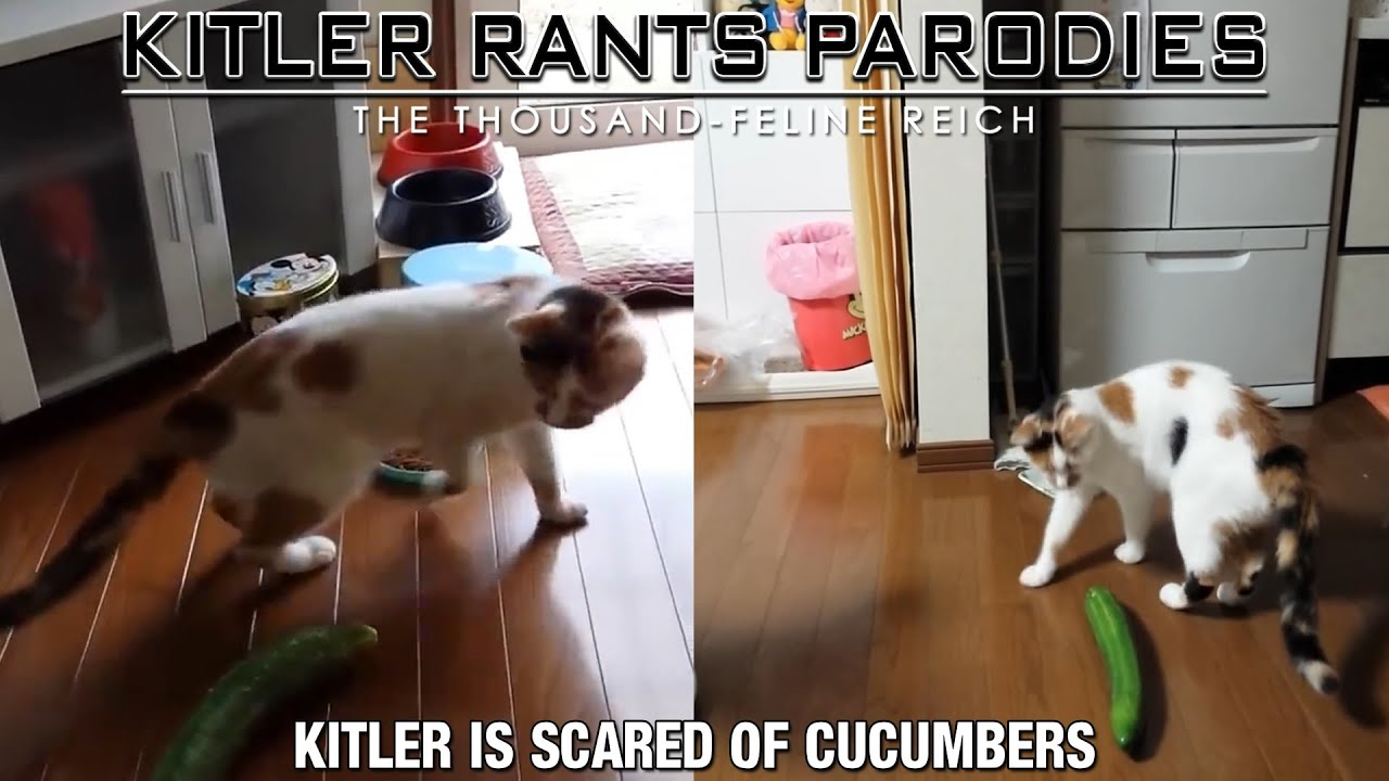 Kitler is scared of cucumbers