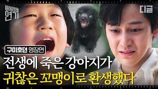 [#오지연] 구미호뎐 그 꼬맹이의 전생이 밝혀지다🖤 까만 댕댕이와 김범에 얽힌 눈물나는 사연ㅠㅠㅠ   #구미호뎐 #디글