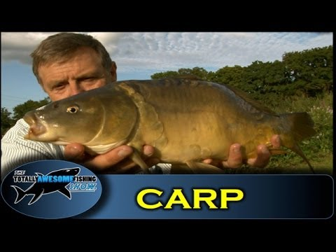 Carp fishing with bread the totally awesome fishing show for Fishing with bread