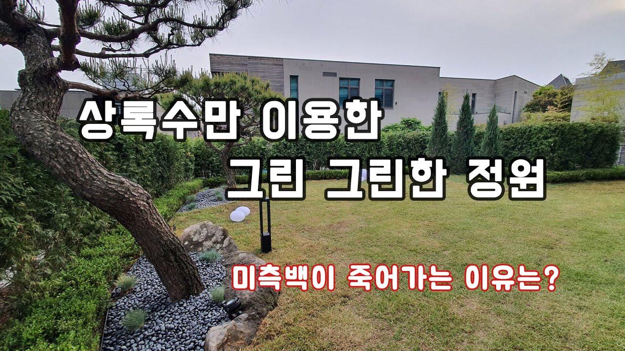 미측백이 죽어가는 정원 리모델링~      /조경/