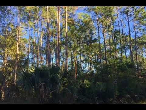 21  Potomac Drive Palm Coast FL 32164