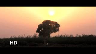 Скачать Boy In The Tree A Short Film By Aneel Ahmad Coming Soon 2011