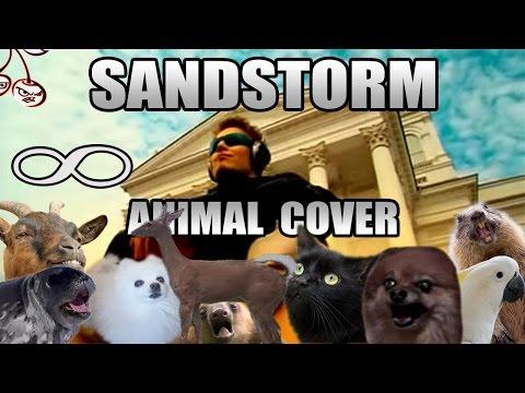 Darude - Sandstorm (Animal Cover)