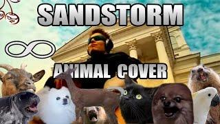 Baixar Darude - Sandstorm (Animal Cover)