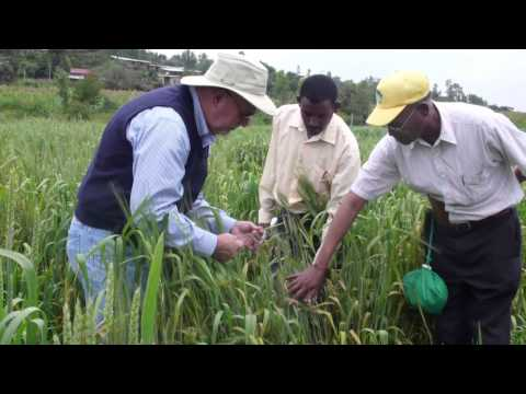 The DRRW Project in Ethiopia - Capacity Building, Collaboration, and New Wheat Varieties for Farmers